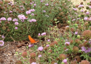 monarch burbank